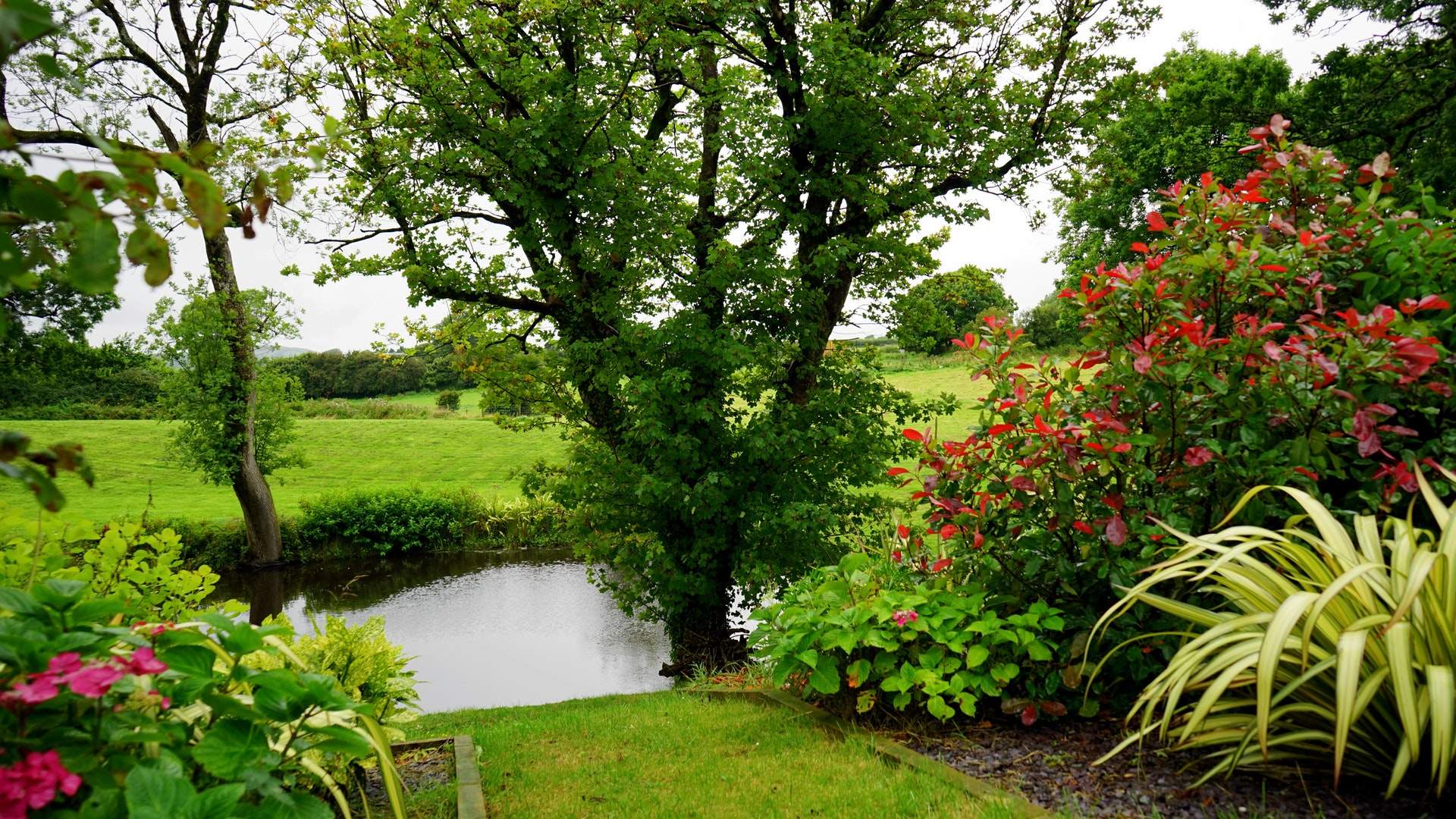 żagiel ogrodowy